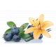 Vzorka WPC80 Blueberry Vanilla 25g